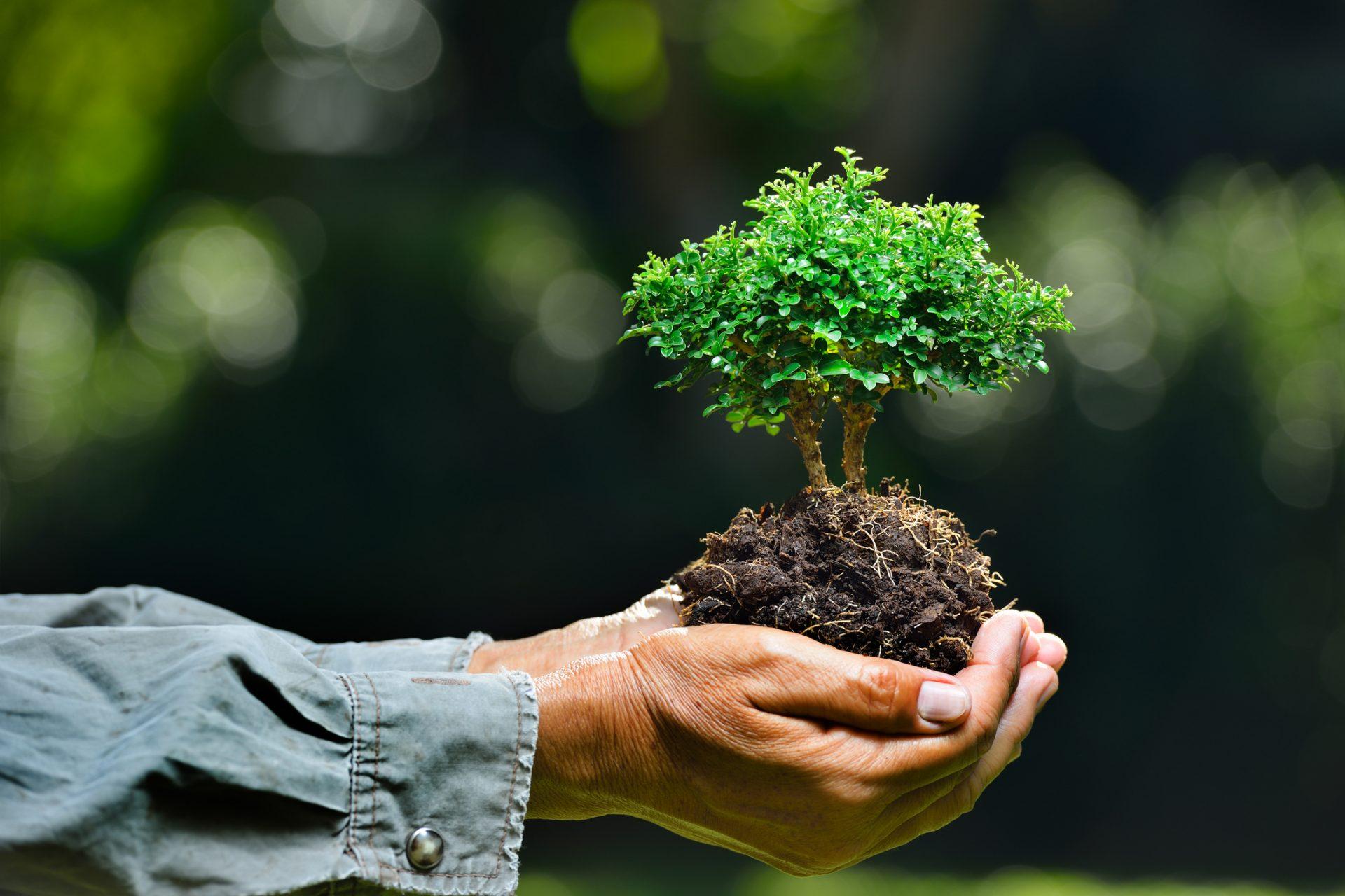 environmental sustainablity