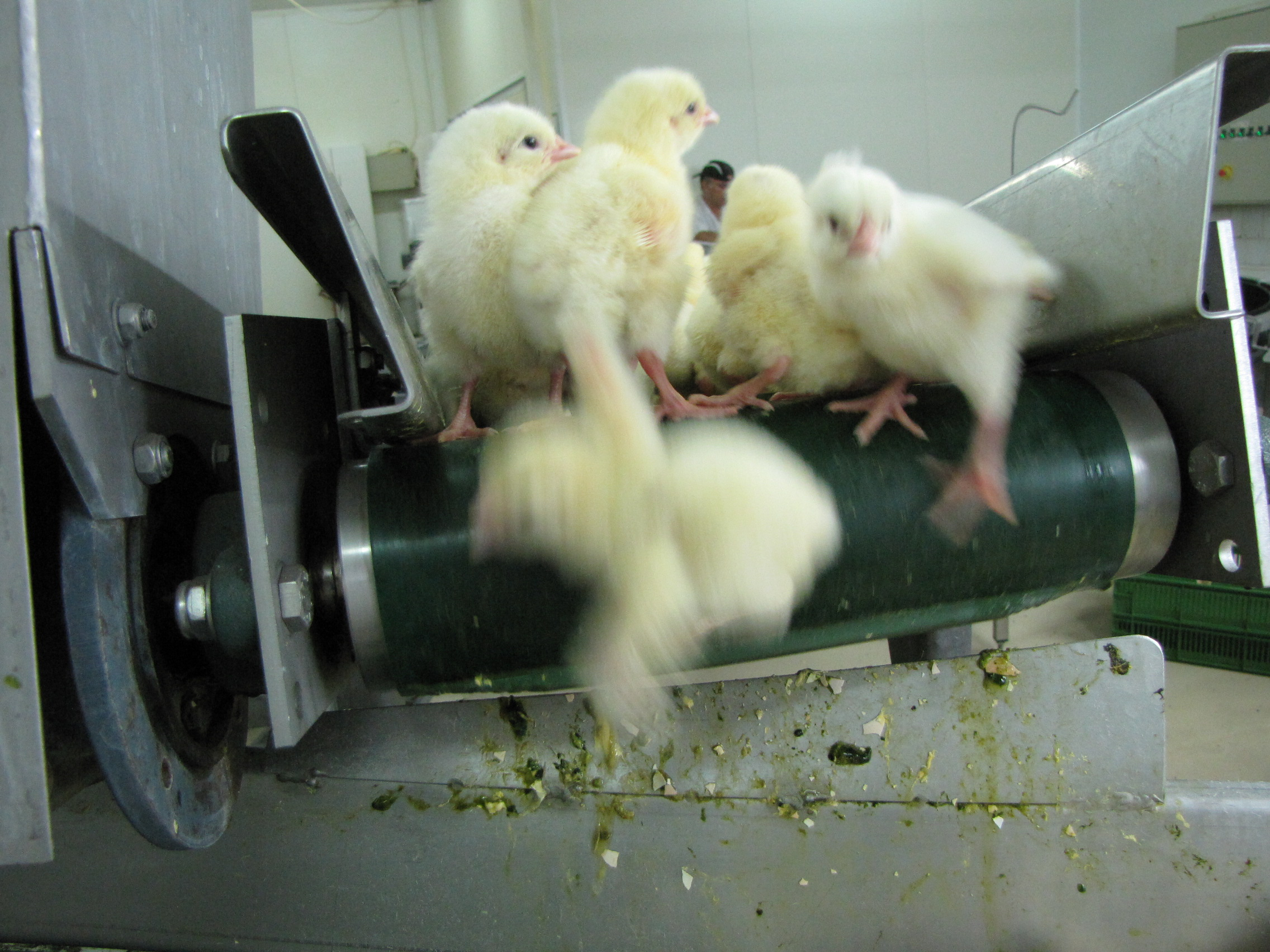 Switzerland bans culling