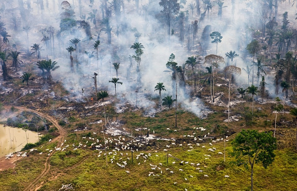Environmental Risk