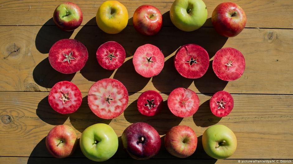 appalachian apple hunter