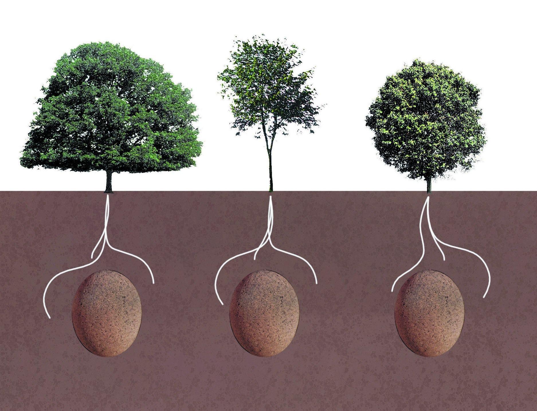 biodegradable burial pod