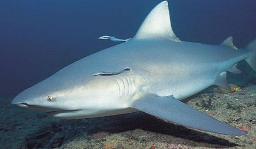 UK Shark Fin Ban