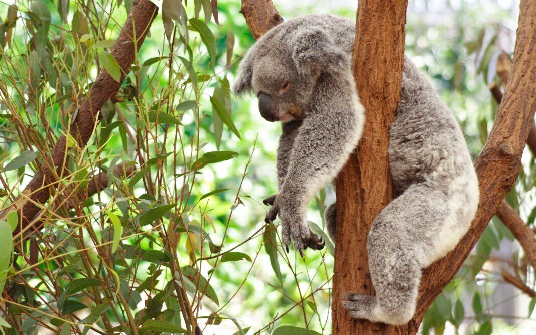 animals sleep