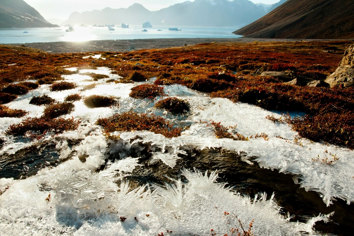 permafrost pandemic