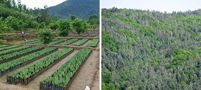 10 billion trees plan
