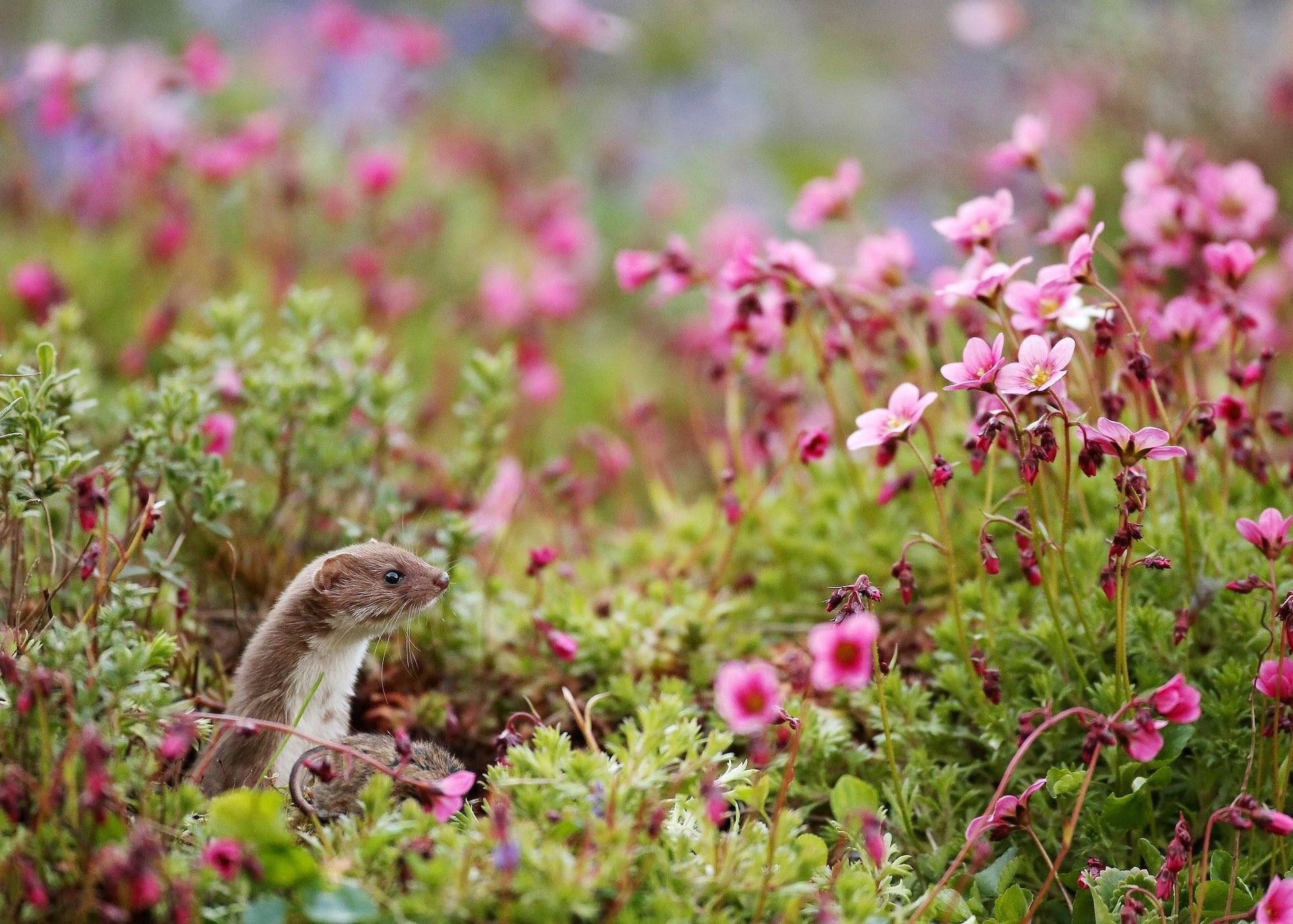 england wildlife projects