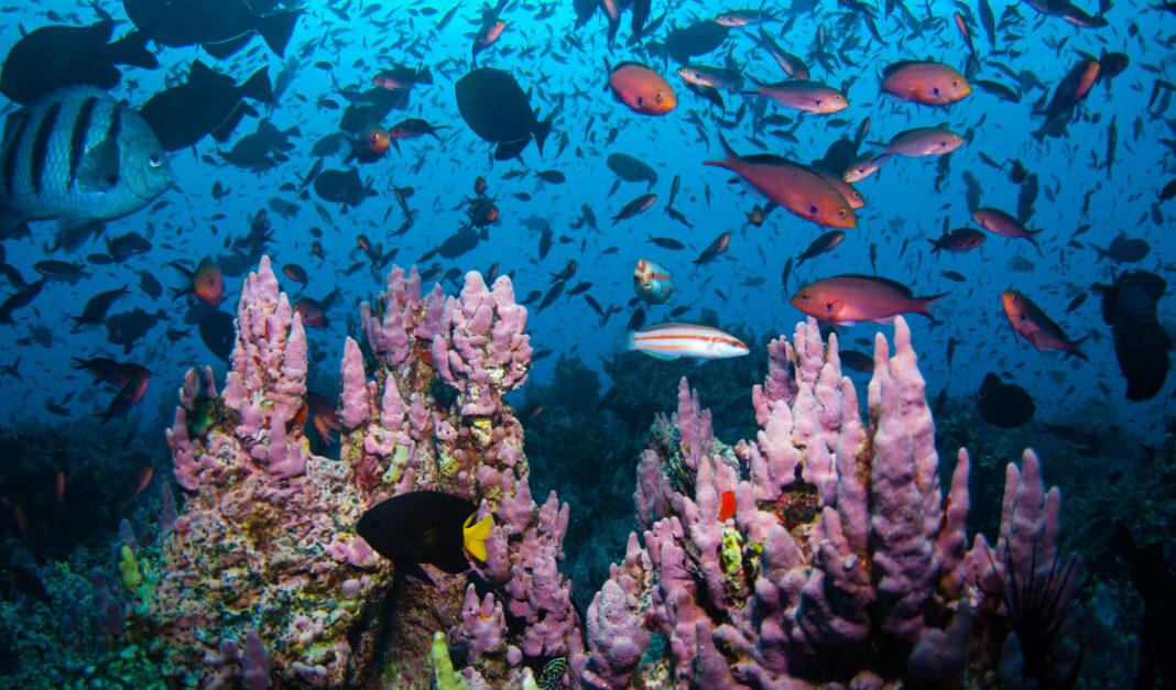 Rewilding Seas