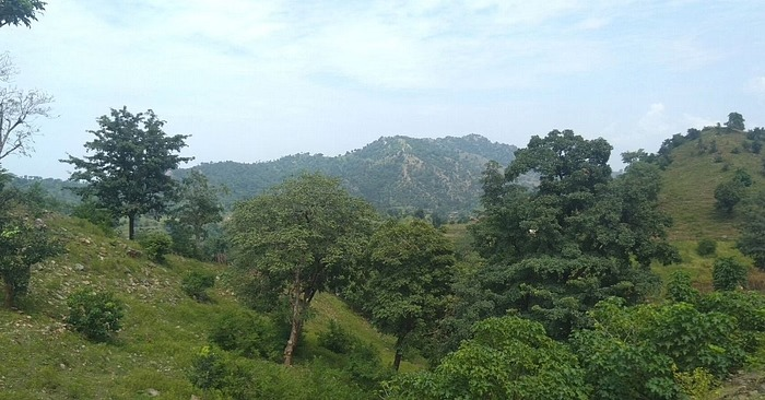 rajasthan reforestation