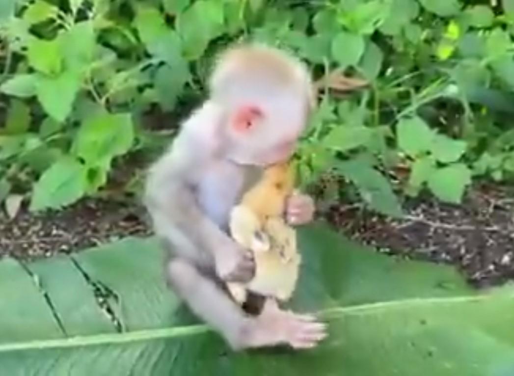 monkey kissing
