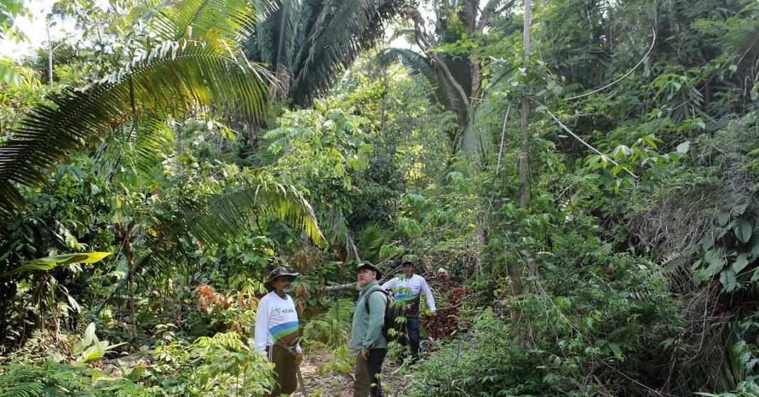 amazon tree loss