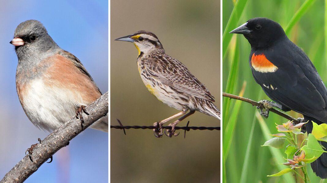 bird population