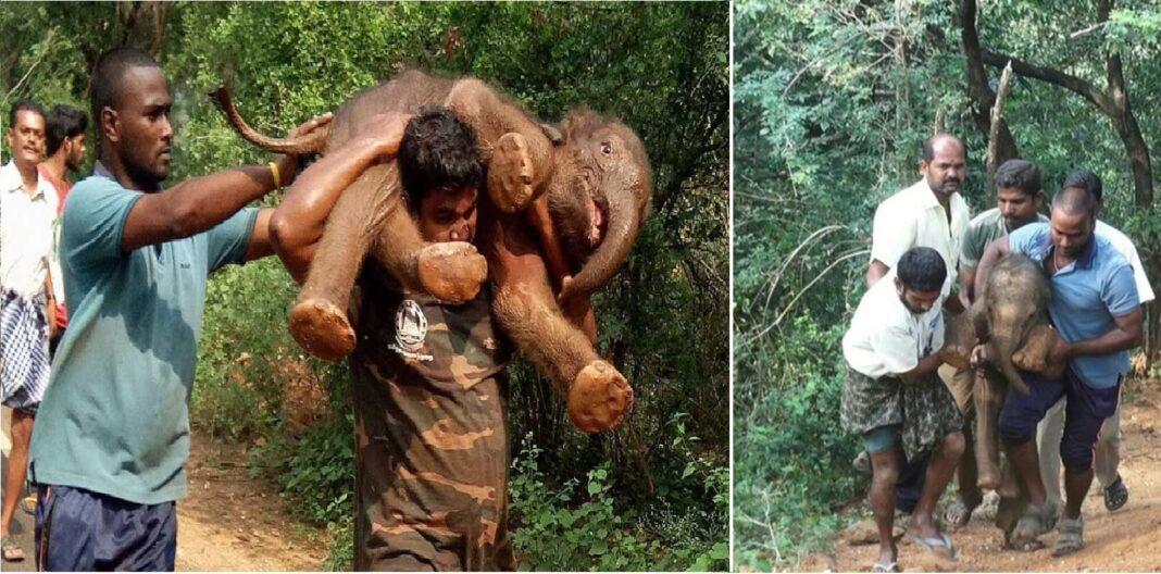 man who carried an elephant