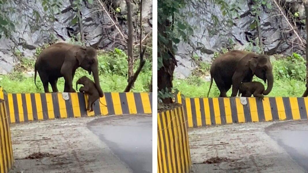 Elephant Helping Baby