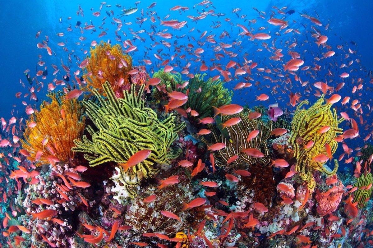 ocean nutrients