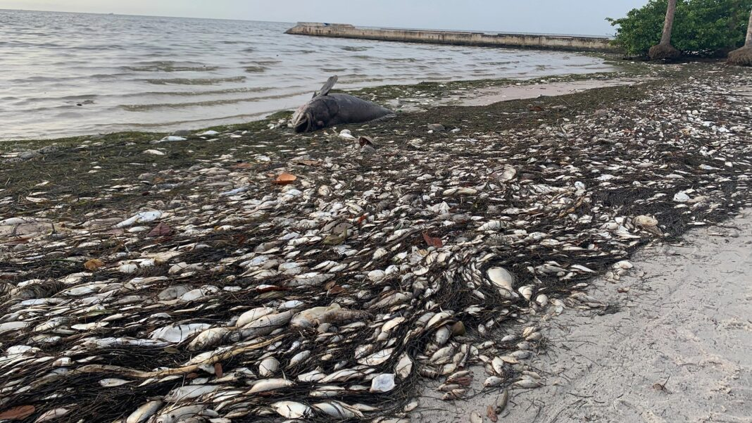 toxic red tide