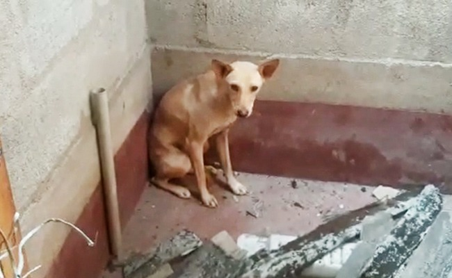 trapped dog