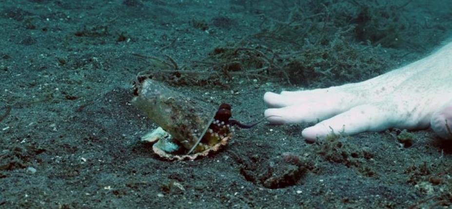 octopus in plastic cup