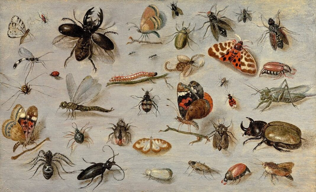 insect extinction event