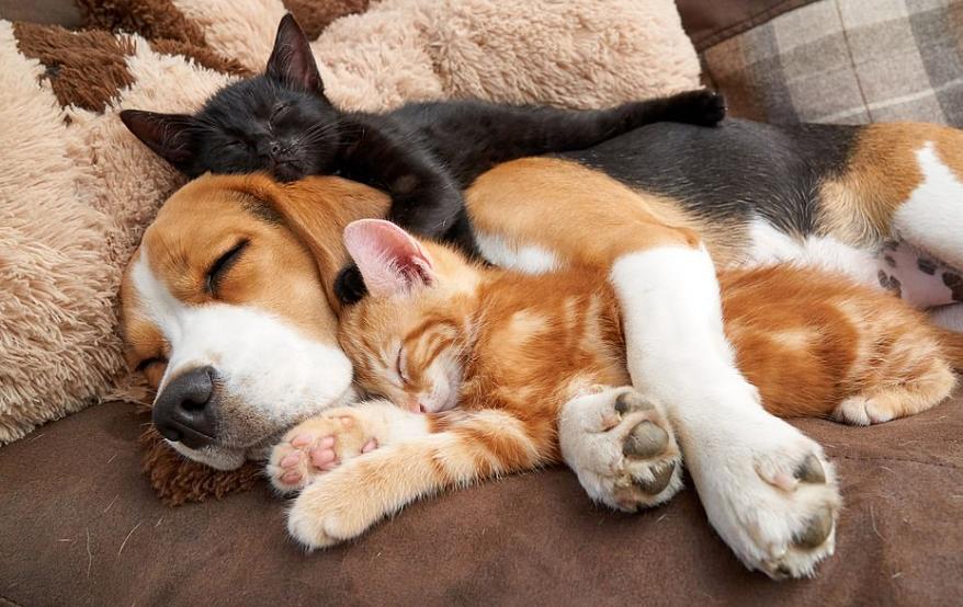 cuddling lion couple