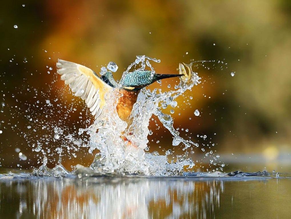 perfect kingfisher photo