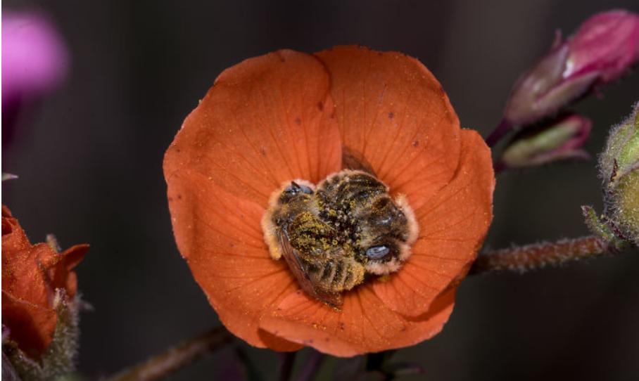 Sleeping Bees