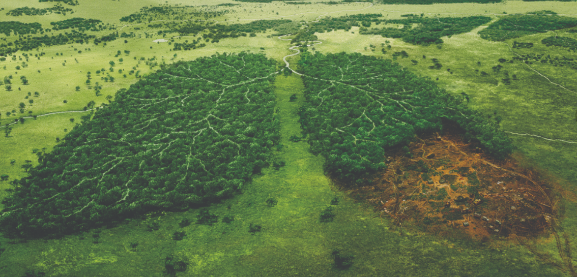France Deforestation Ban