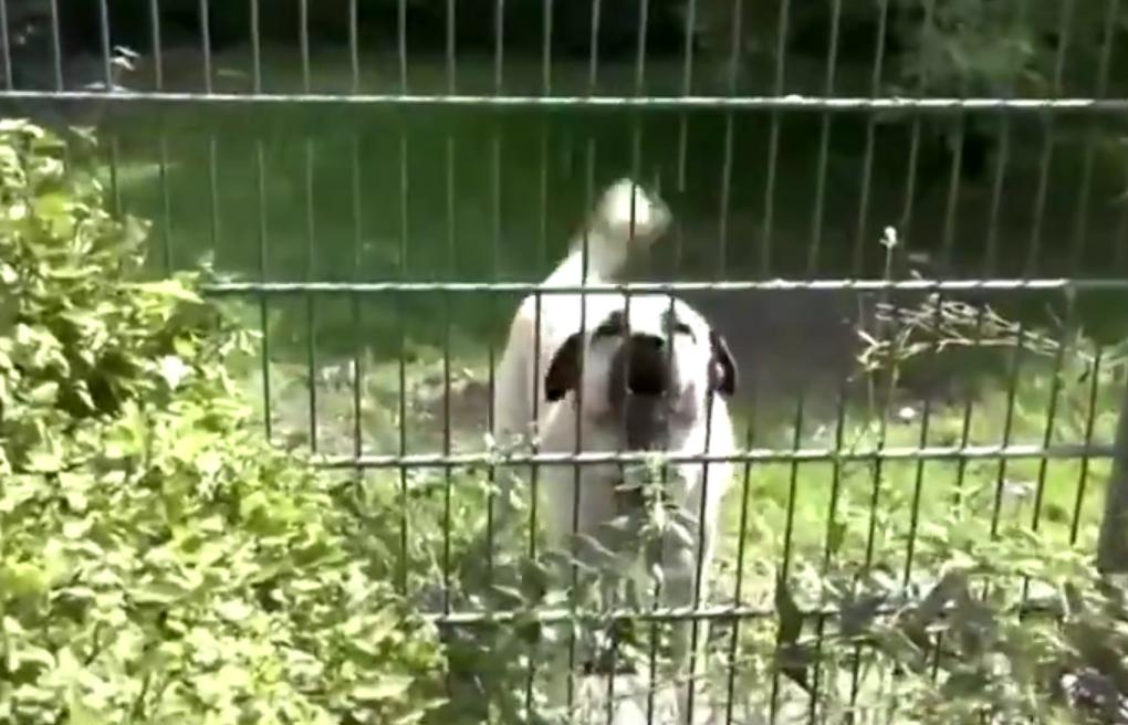 Munich Animal Shelter
