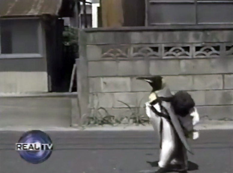Friendly Penguin