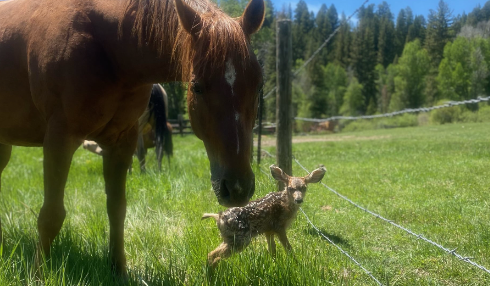 Kind Horses