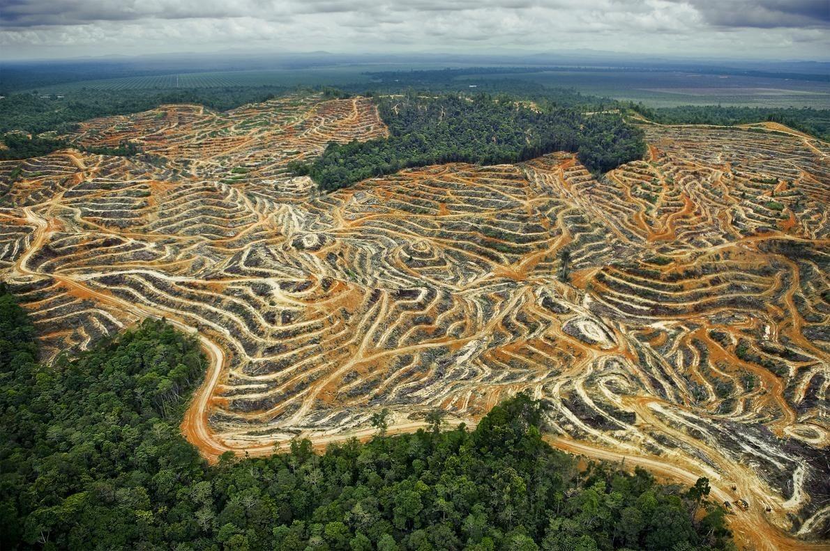 sumatran reforestation