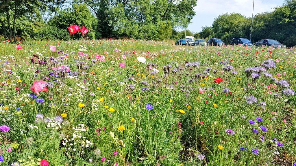 germany's meadows