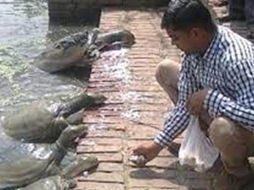 Kanpur Pond