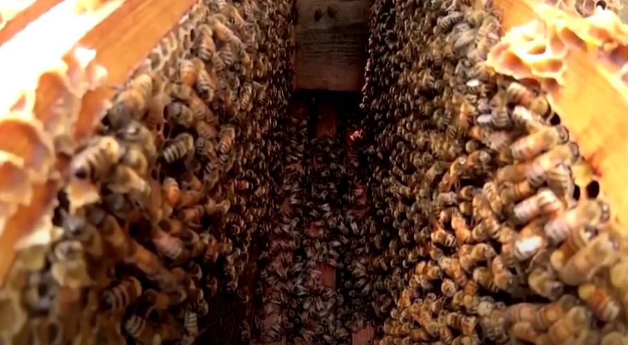 Honey Crop