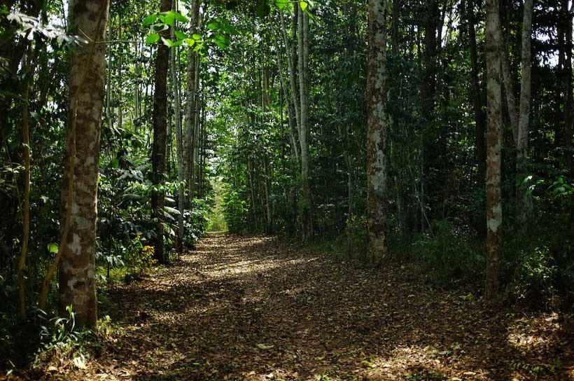 togo sacred forests